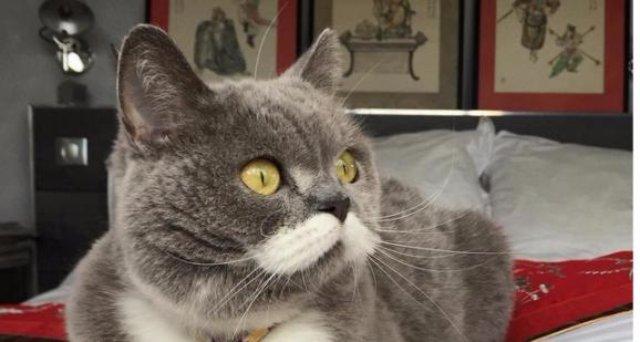 Интернет пополнился еще одним звездным котом