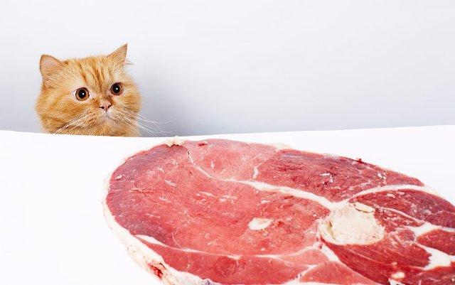 В Англии едва не был арестован кот за кражу бекона у хозяина