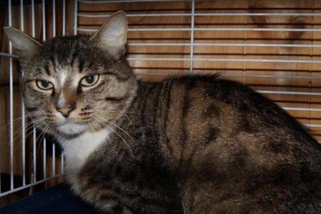 Преданный екатеринбургский кот преодолел пятьдесят километров, чтобы вернуться в родной дом