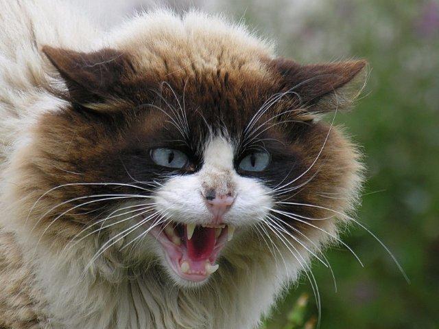На Харьковщине умер человек от укуса кота
