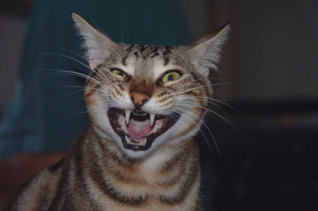 В Ровненской области бешеный кот укусил троих людей