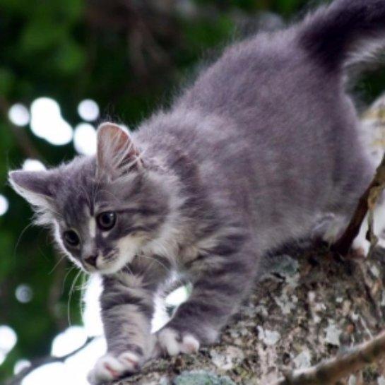 В Липецке кошку сняли с высокого тополя