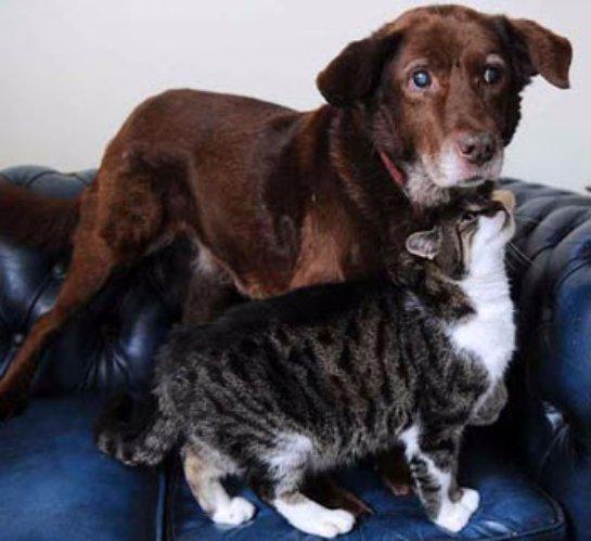 Кошка стала поводырём для слепой собаки