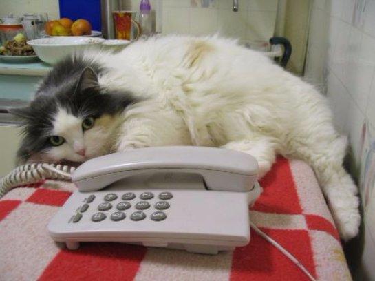 Кошка вызвала службу спасения в Великобритании