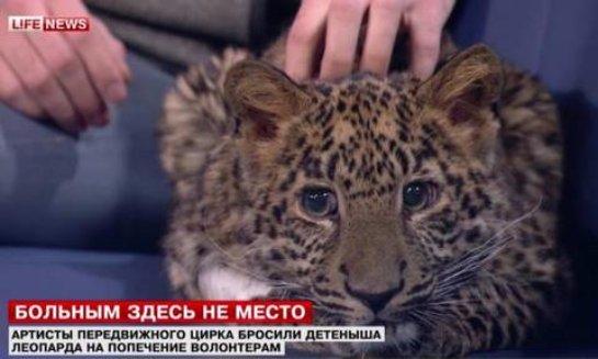 В Москве семья приютила леопарда