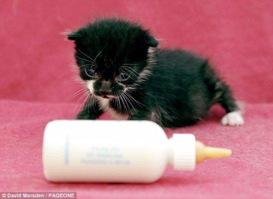 Двухнедельный котенок по кличке Феликс провел длительное путешествие