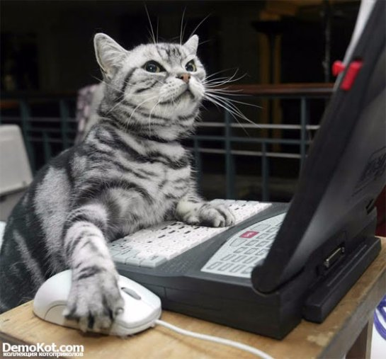 В Японии кошка стала помощником полиции в поимке хакера