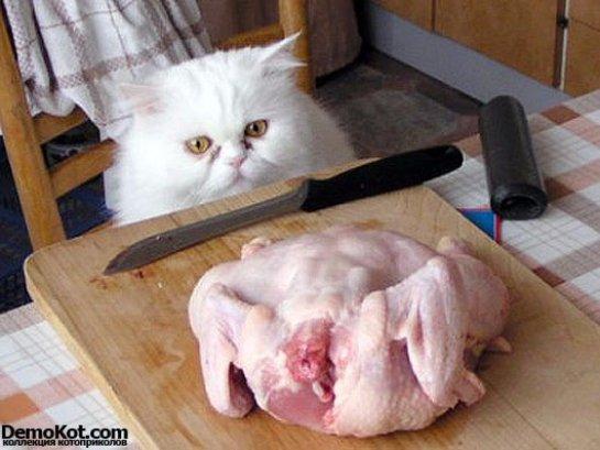 Полиция расследует дело о краже курицы  котом
