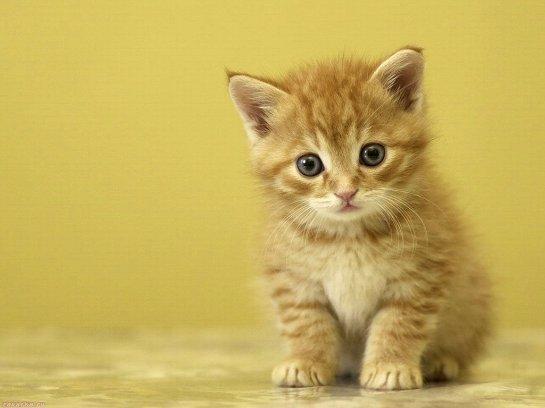 Девушка рискнула здоровьем ради спасения котенка