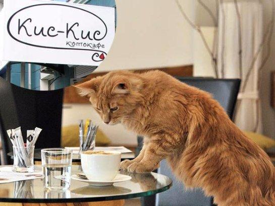 В Красноярске появилось кофе для котов