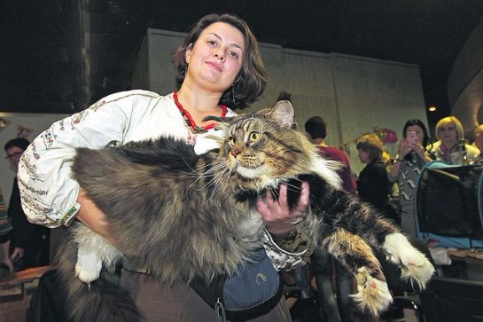 Самым большим котом в Украине признан кот Вуйко