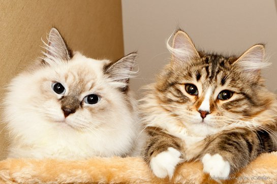 Женщина украла 15 кошек из приюта