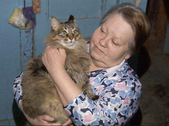 Кошка разбудила весь подъезд, спасая ребёнка