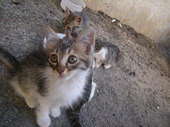 В Италии будут сажать в тюрьму за выброс животного на улицу