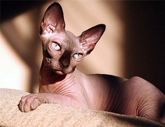 В Ростове живет  кот-женоненавистник