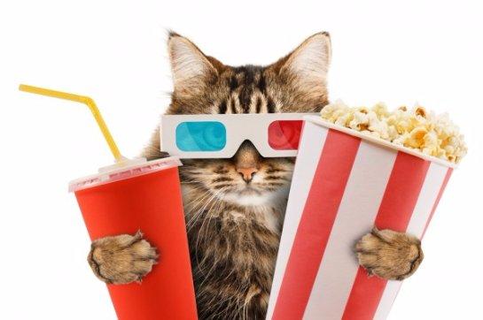 В Москве создадут кинотеатр, который можно посещать с домашними животными