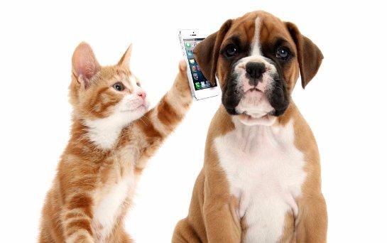 В сети проходит сбор средств на смартфон для кошек и собак