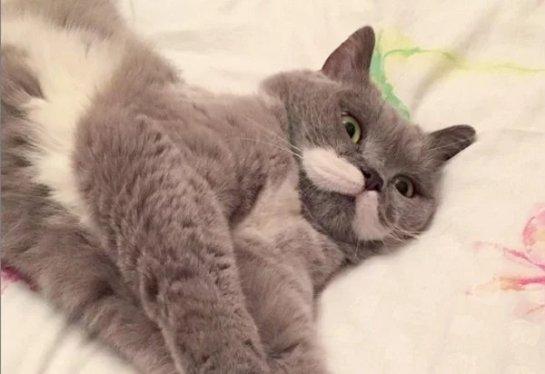 Необычные усы сделали кошку героиней Instagram