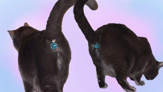 Создано украшение для кошачьих хвостов