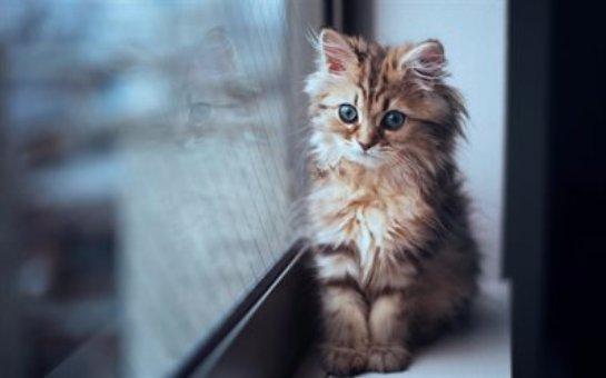 В Австралии объявлен комендантский час для кошачьих