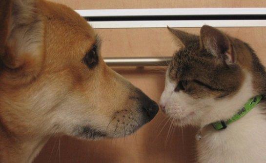 Кот и собака стали настоящими родственниками