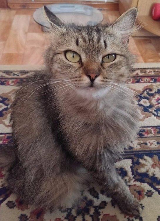 Бдительная кошка спасла свою хозяйку