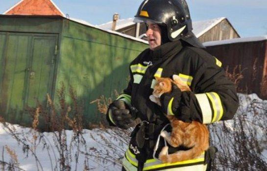 Сотрудники МЧС спасли кота