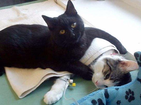 В польской ветеринарной клинике работает кот-медбрат