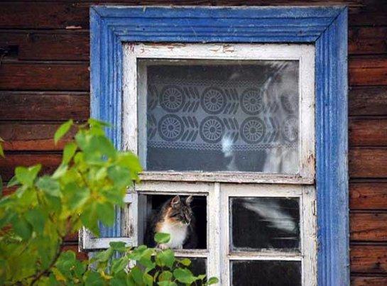 Жительница Новосибирска приобрела дом для 52 кошек