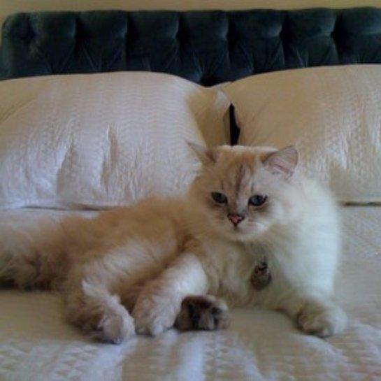 Кот не дает своему хозяину исполнять супружеский долг
