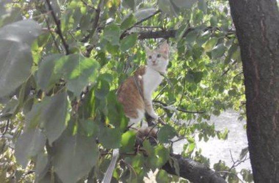В Киеве спасатели сняли котят с дерева