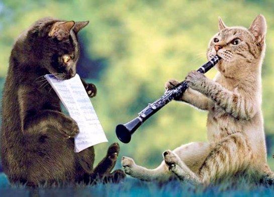 В США ученые написали музыку специально для котов