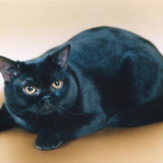 В Челябинске состоится парад черных котиков