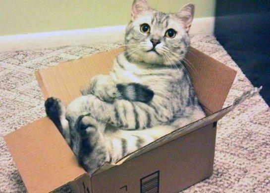 Ученые объяснили любовь кошек к картонным коробкам