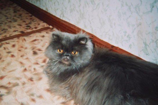 Кота Яшку выселили из коммунальной квартиры