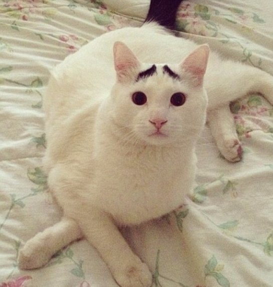 Котику удалось завоевать любовь интернет-пользователей благодаря черным бровям