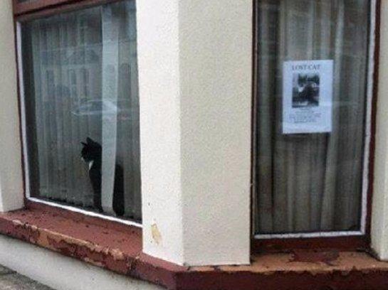Кошка сразу отреагировала на объявление о своем исчезновении
