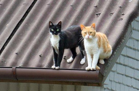 Пожарные спасли двух котов из пылающего дома