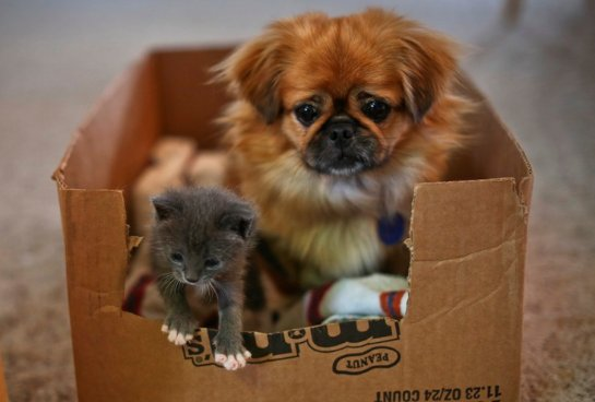 Собака стала мамой для котенка