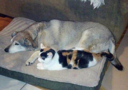 Кошка стала сиделкой для парализованной собаки