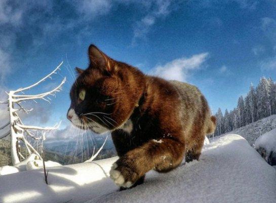 Новый кот-путешественник обрел популярность в соцсетях