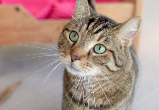 Кошка помогла полиции задержать вора-рецидивиста