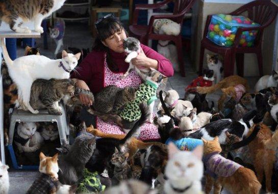 Домашний хоспис для кошек