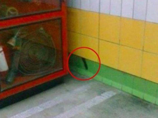 В стене каирского метро пять лет жил кот