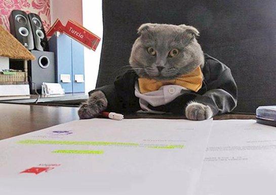 Кота назначили пиар-менеджером румынского интернет-магазина