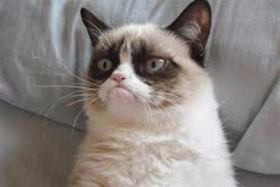 Известный Сердитый кот займет своё место в музее мадам Тюссо