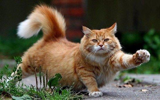 Видео с котами оказывают терапевтическое воздействие