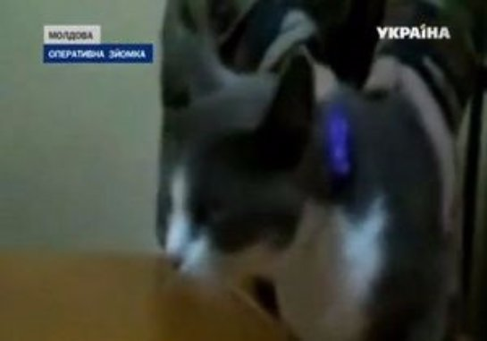 Кот пытался пронести наркотики заключенному