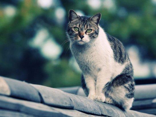 Исследователи выяснили, почему коты любят гулять сами по себе