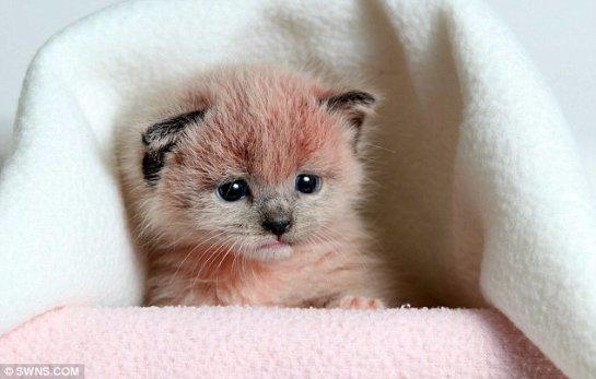 Несчастные розовые котята были найдены на территории цементного завода